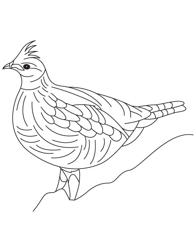 Heavily built grouse coloring page Download Free Heavily built
