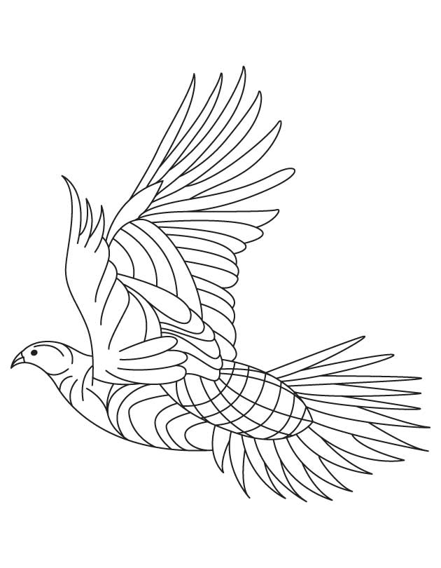 Heavy Feathered Grouse Coloring Page