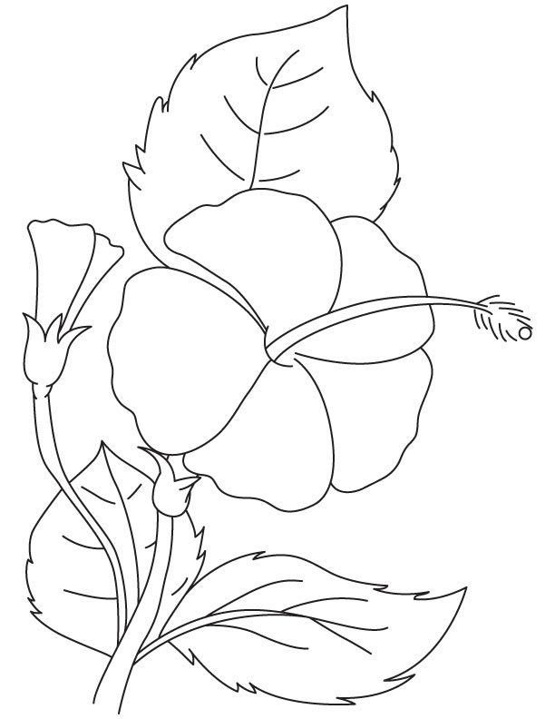 Detail Hibiscus Flower Coloring Page