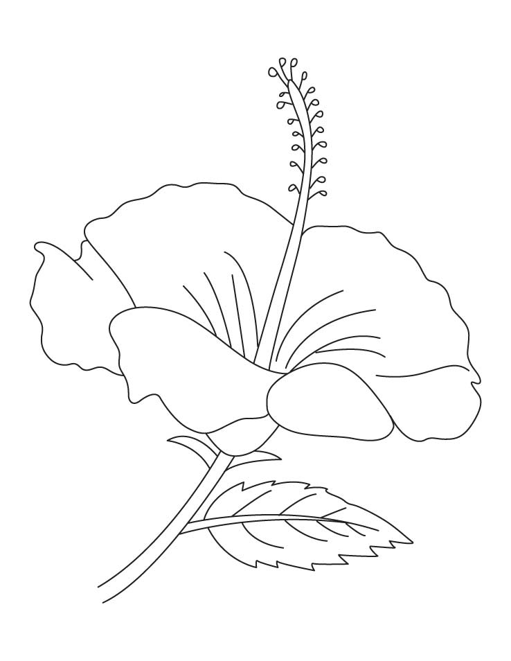 Coloring Pages Of Hibiscus Flowers : Hibiscus flowers colouring pages