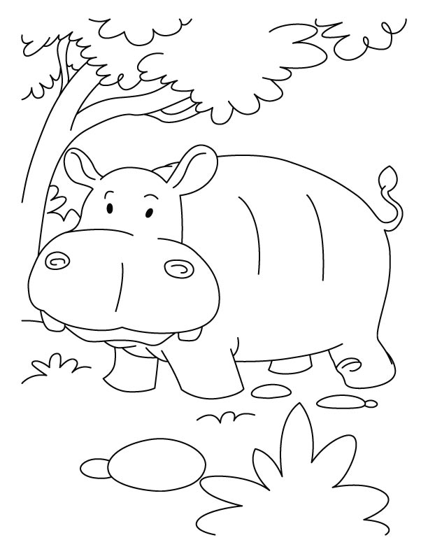 Hippopotamus In Jumgle Coloring Pages