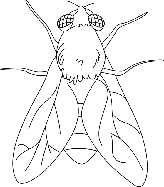 House Fly coloring pages