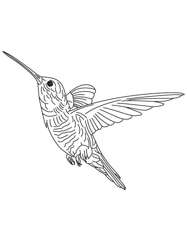 Hovering Hummingbird Coloring Page