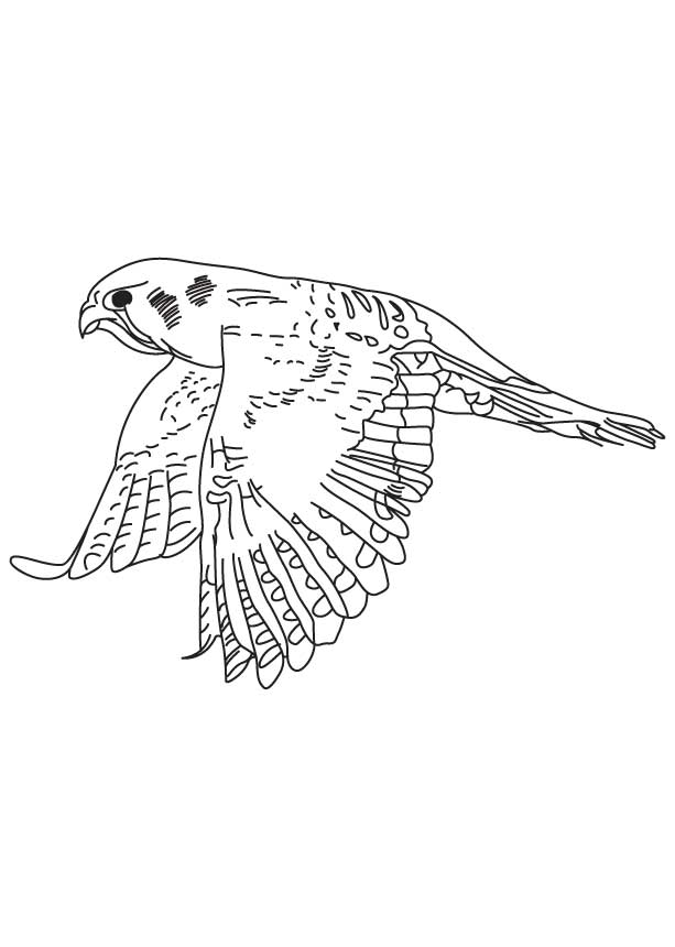 Kestrel hovering in the air coloring page