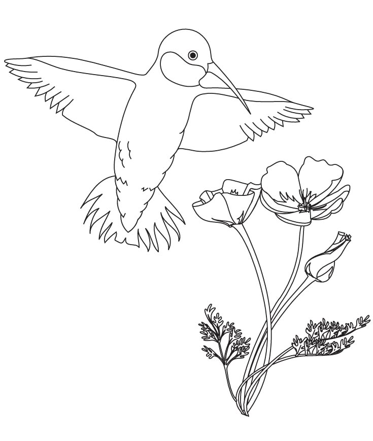 Hummingbird with flower coloring pages | Download Free Hummingbird ...