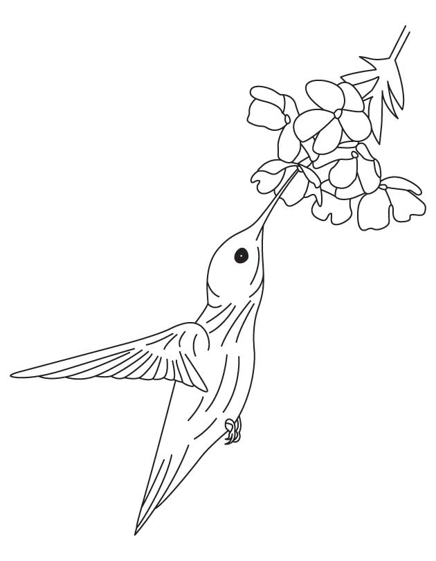 Hummingbird and flower coloring pages | Download Free Hummingbird ...