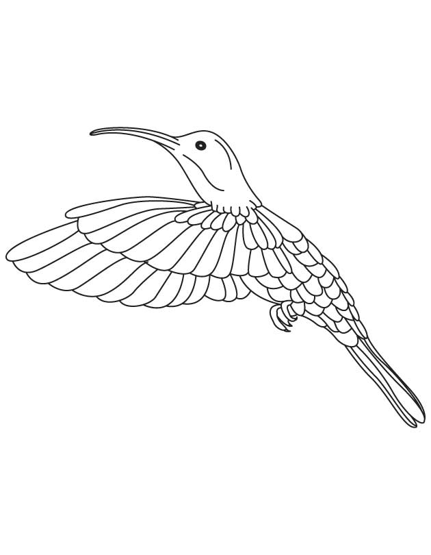 hummingbird looking moth coloring page