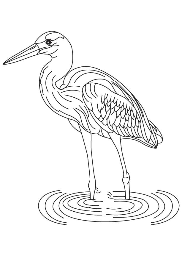 blue heron coloring pages - photo#33