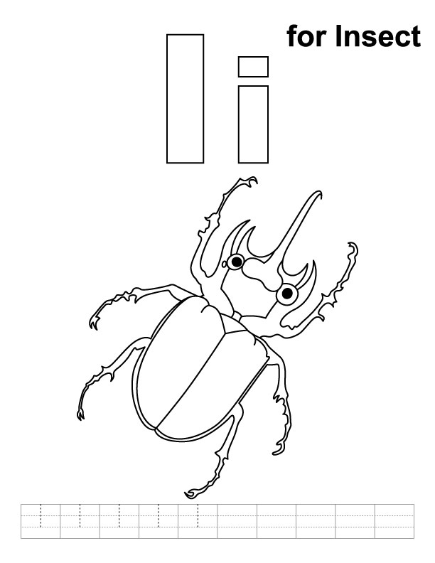 What Is An Insect Notebooking Page