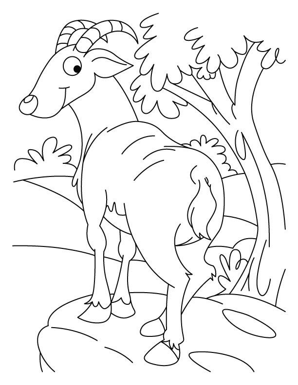 Ibex on top coloring pages