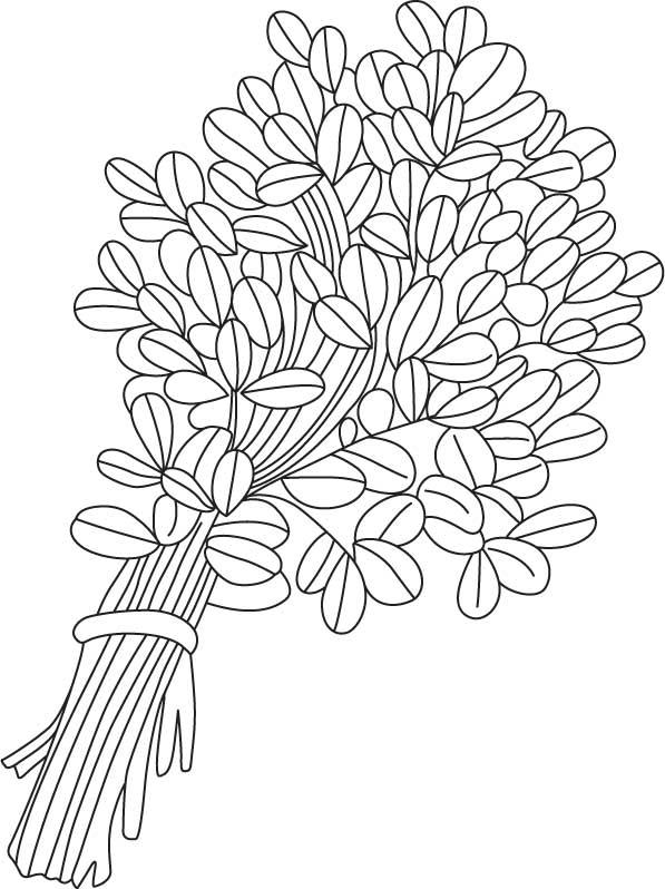Indian fenugreek coloring page  Download Free Indian fenugreek