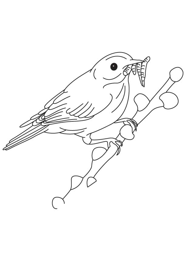 eastern bluebird coloring page - free coloring pages of mountain bluebird