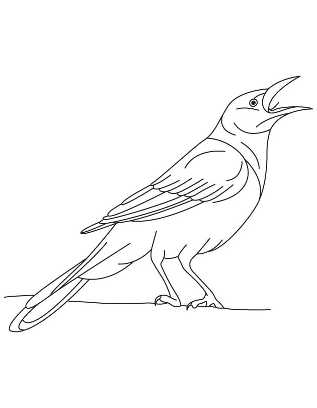 Iridescent Grackle Bird Coloring Page