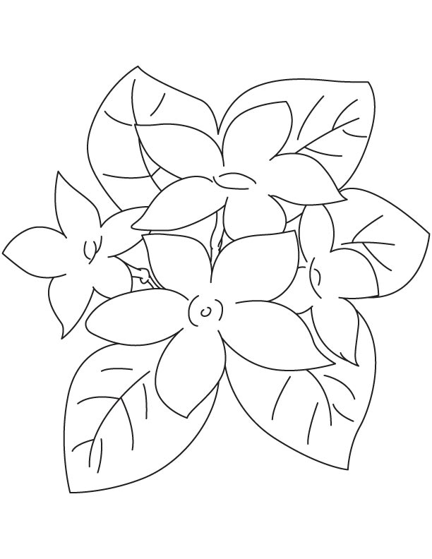 Jasmine Flower Coloring Page Download Free Jasmine
