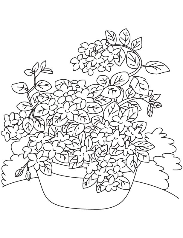 Jasmine Vine Coloring Page