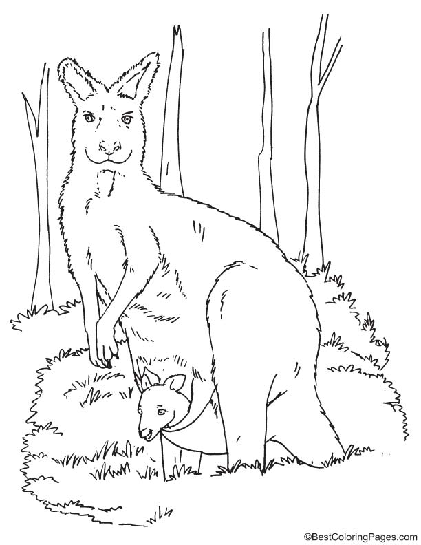Kangaroo with joey coloring page