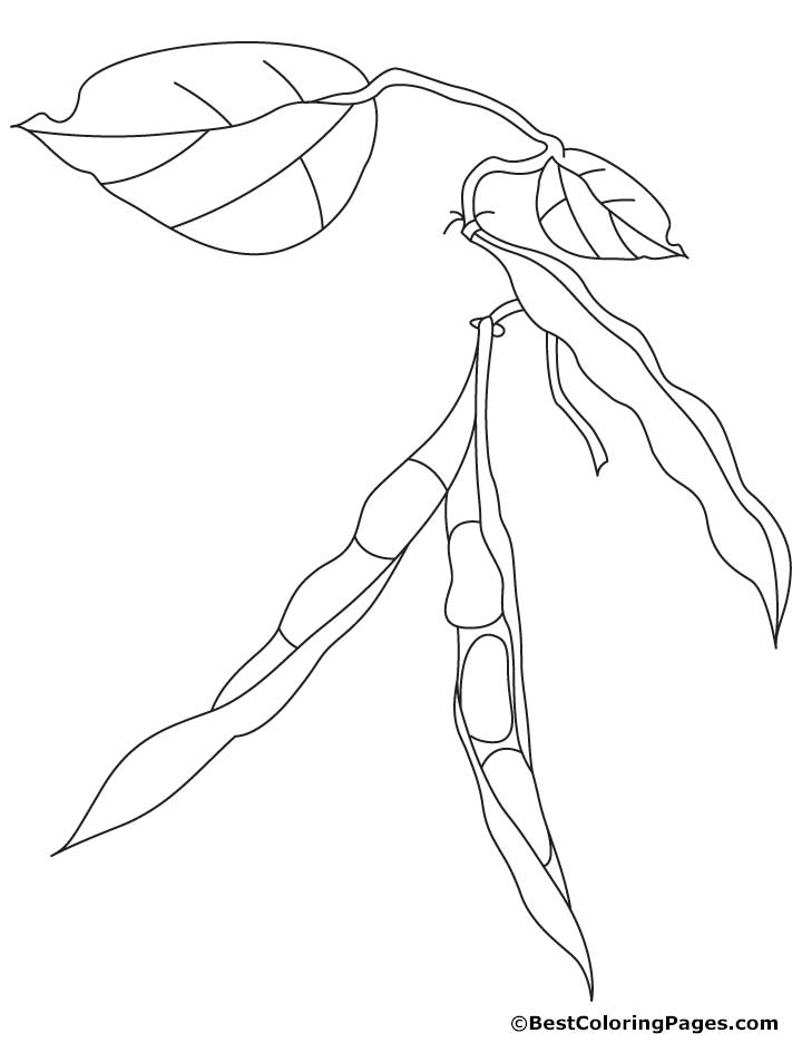 Kidney beans coloring pages