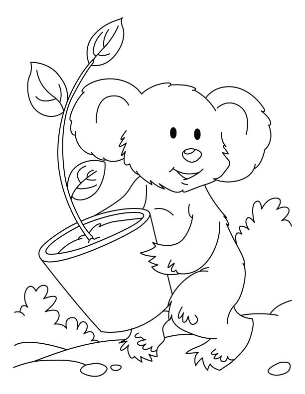 Koala with eucalyptis plant coloring pages