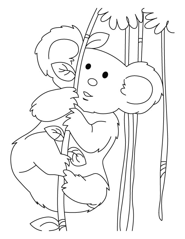 Koala full of energy coloring pages