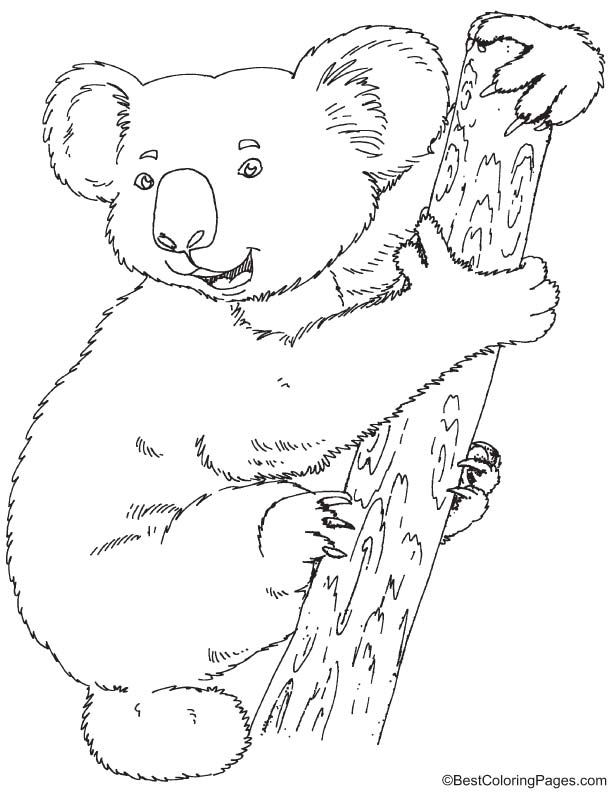 Koala coloring page download free koala coloring page for Koala coloring page