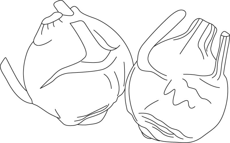 Kohlrabi vegetable coloring page