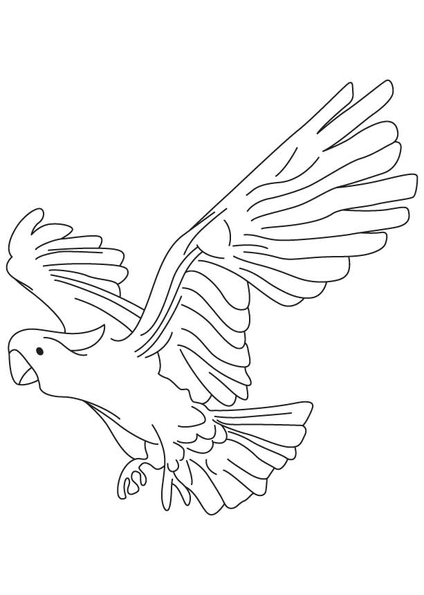 Large New Zealand parrot coloring page