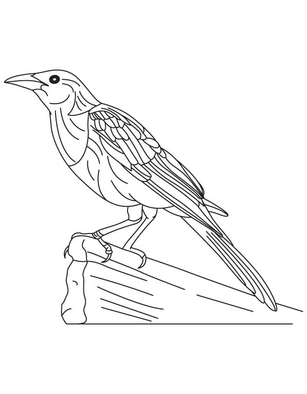 Large common grackle coloring page