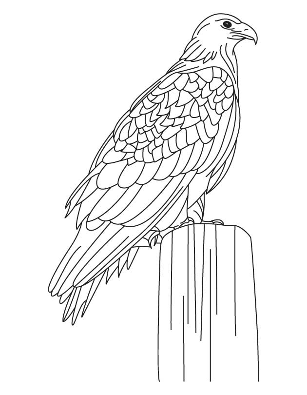largest golden eagle coloring page