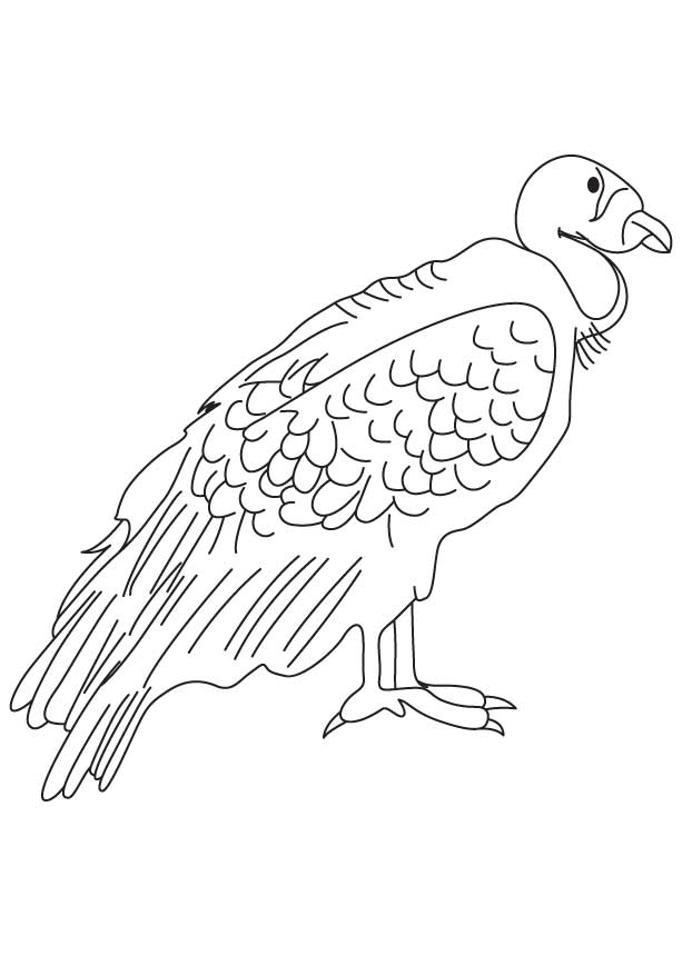 Largest Flying Land Bird Coloring Page
