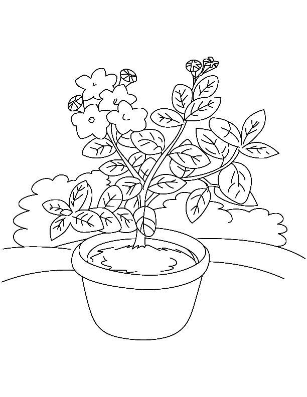 Laurel flower nursery coloring page