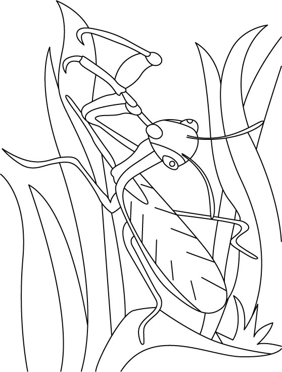 Leaf Mantis searching coloring pages