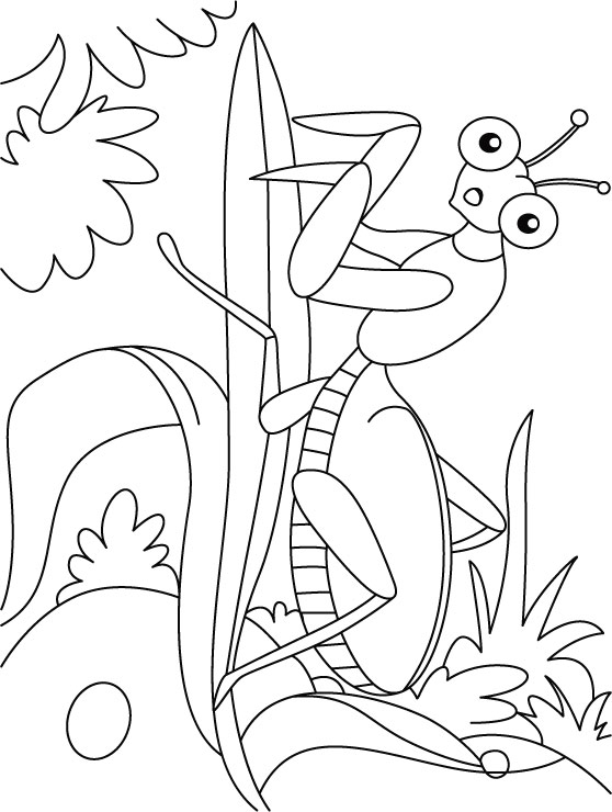 Leaf mentis at ease coloring pages