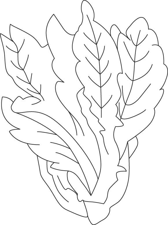 Lettuce coloring sheet