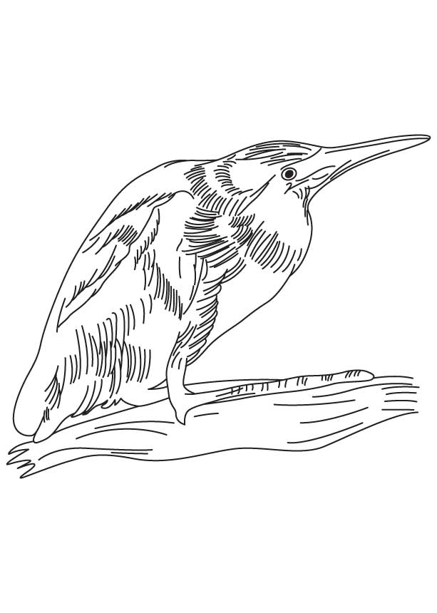 Little bittern coloring page
