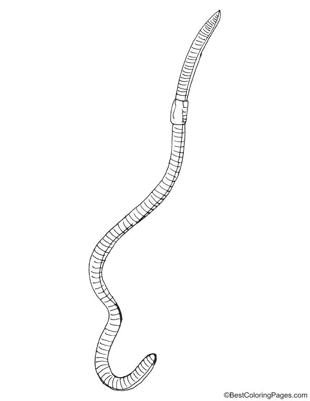 Long earthworm coloring page