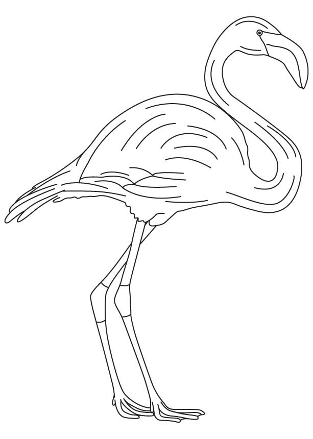 long legged flamingo coloring page - Flamingo Coloring Pages