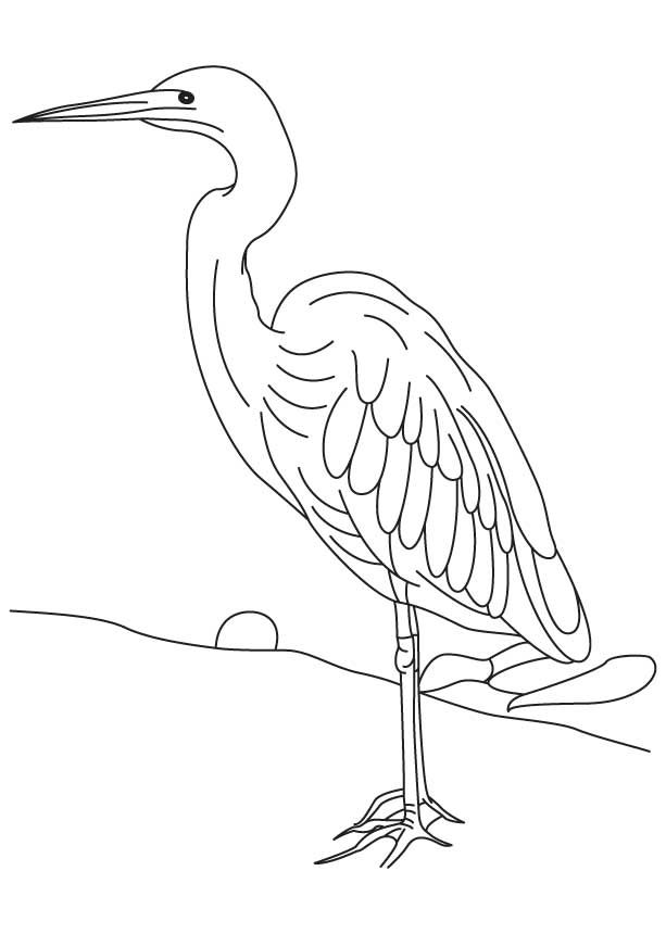 blue heron coloring pages - photo#29