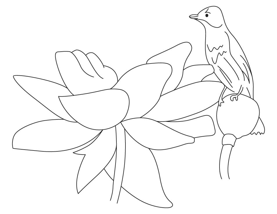 Lotus Flower Colouring Worksheet Coloring Page