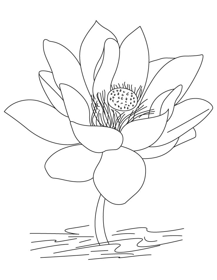 coloring pages summer time plants