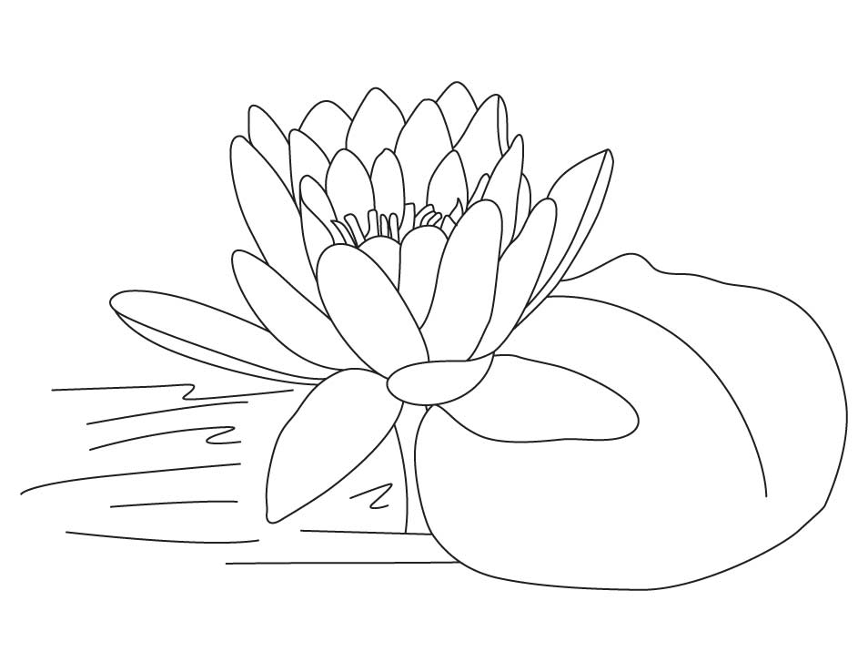 lotus flower coloring pages - photo#19