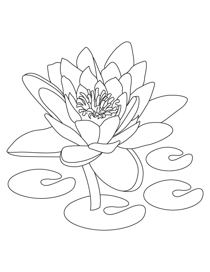 Lotus Flower Coloring Pages Images amp Pictures Becuo