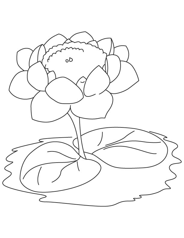 Lotus with two leaves coloring page