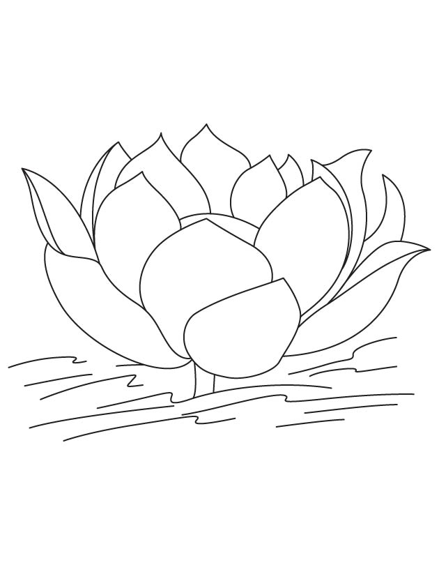 Lotus without leaves coloring page