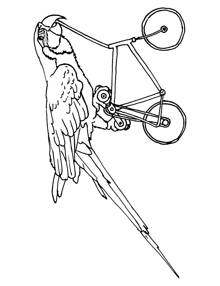 Macaw cycling coloring page