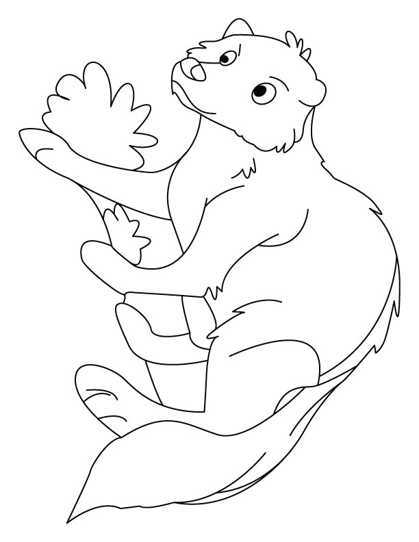 Mongoose making his burrow coloring pages
