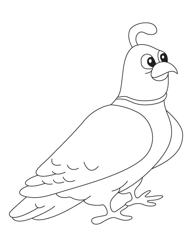 coloring page | Download Free Mountain quail coloring page for kids ...