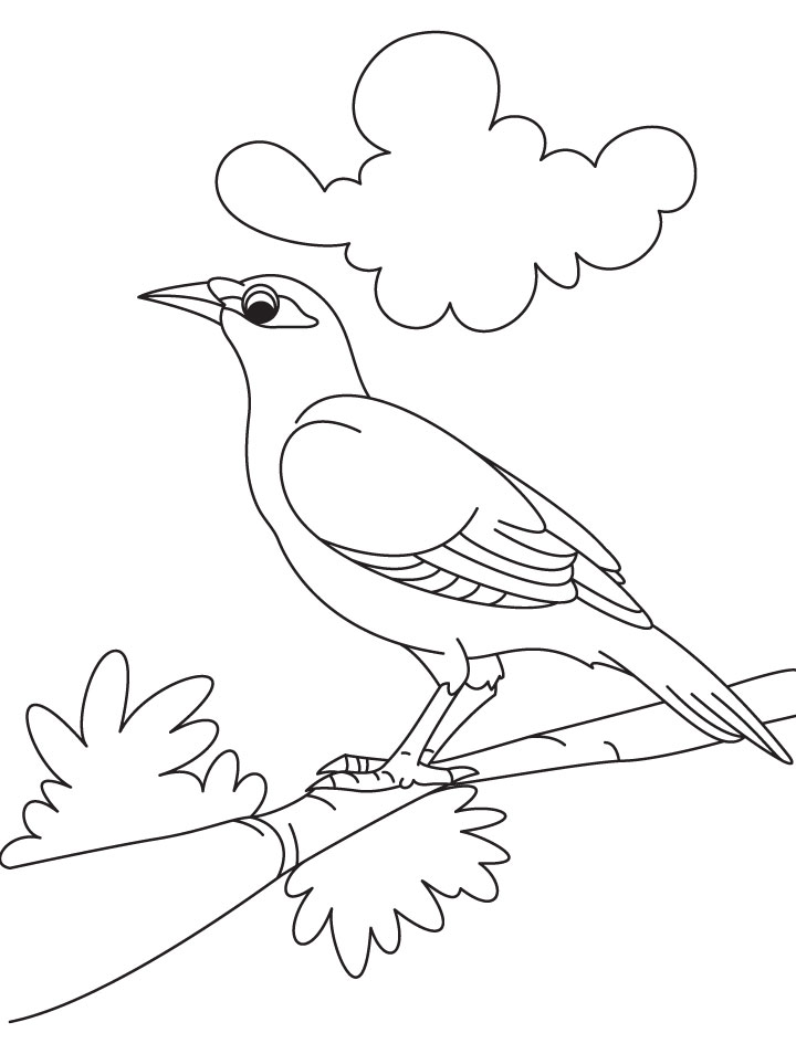 A Cute Myna Bird Coloring Page