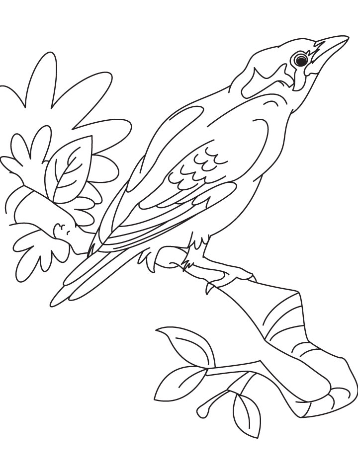A Beautiful Myna Bird Coloring Page