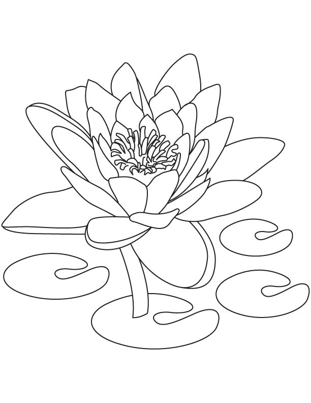 national flower of india coloring page