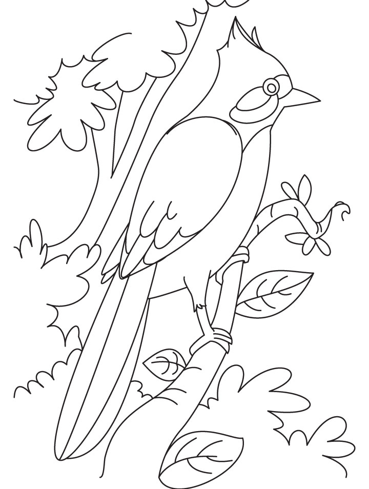 Bird Coloring Sheets